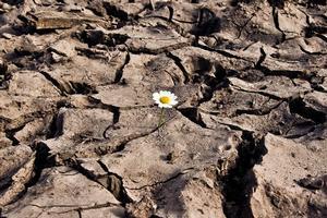 Surviving a Spiritual Drought